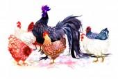 Con gà trong tục ngữ, thành ngữ
