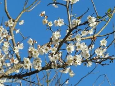 Về nơi hoa nở trắng trời để tận hưởng không khí xuân