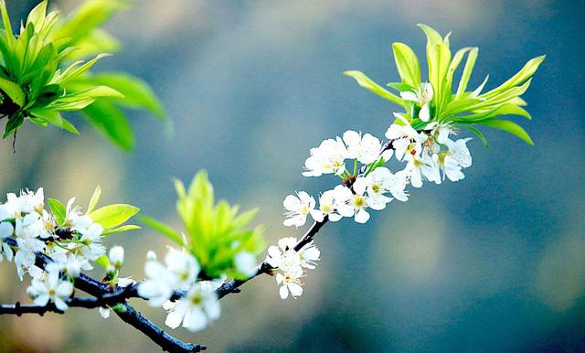 Ngắm tuyệt phẩm hoa ở miền biên viễn xứ Nghệ
