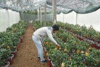 Nông nghiệp - Nông thôn: Làm giàu từ hướng đi mới