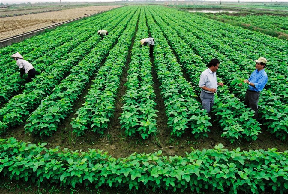 Chi tiết thủ tục sang tên sổ đỏ đất nông nghiệp