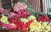 Lâm Đồng: Cận lễ Tình nhân, hoa hồng Đà Lạt tăng giá gấp 3 lần