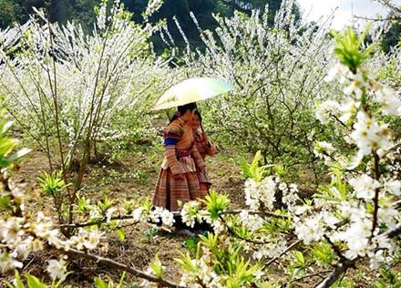 nhung cung duong ngam hoa xuan dep me hon