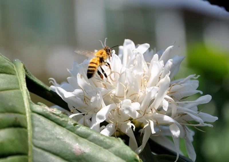 thang 3 den tay nguyen xem mua con ong di lay mat