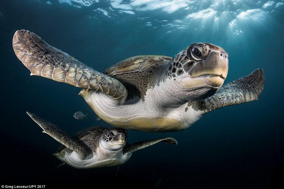 Đại dương kỳ ảo qua những tác phẩm nhiếp ảnh ấn tượng