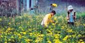 Hoài niệm Làng hoa Ngọc Hà