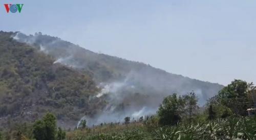 Đang cháy rừng trên đỉnh núi Tà Cú, Bình Thuận