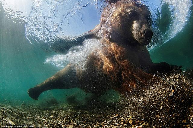 """Tác phẩm """"Ngư phủ dưới nước"""" của nhiếp ảnh gia người Nga Mike Korostelev."""