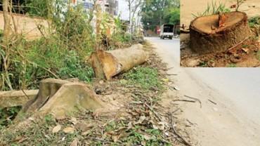 Hà Nội: Cấm tự ý chặt cây xanh khi xử lý vi phạm đô thị