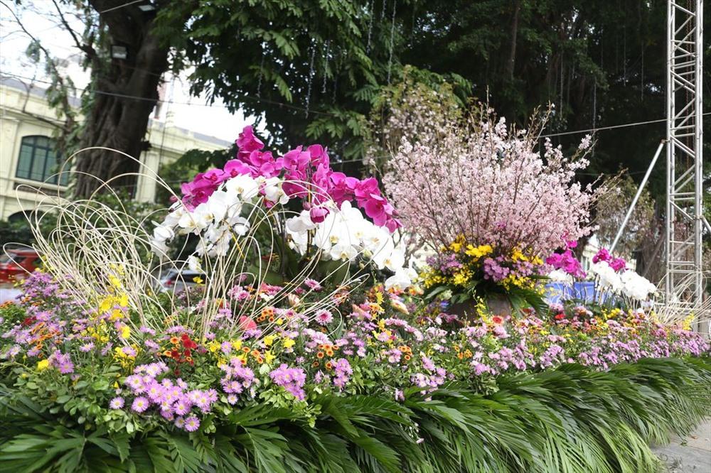 10.000 cành hoa anh đào tưng bừng khoe sắc trước giờ G