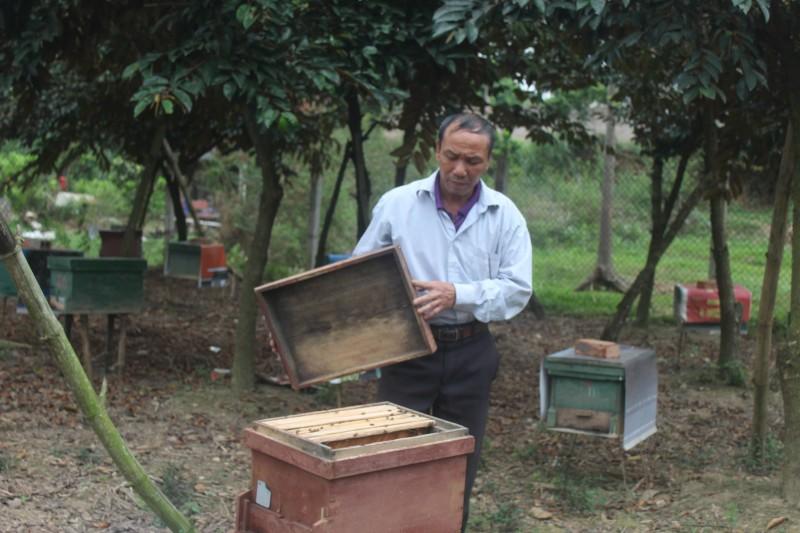 Thị xã Sơn Tây: Hiệu quả từ mô hình nuôi ong mật