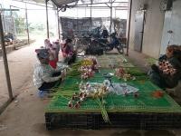 Hiệu quả từ thay đổi mô hình sản xuất nông nghiệp