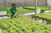 Chỉ có 1% tổng số doanh nghiệp Việt Nam đầu tư vào nông nghiệp: Vì sao?