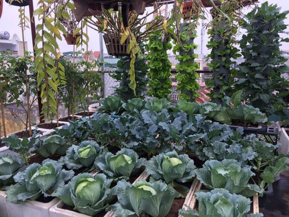 Ông bố đảm ở Hà Nội biến sân thượng 20m2 thành nơi trồng rau, nuôi cá