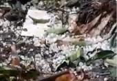 Quảng Trị: Xuất hiện mưa đá ở huyện miền núi