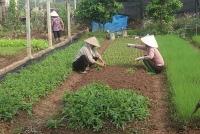 Thị xã Sơn Tây: Nông dân tăng thu nhập nhờ chuỗi liên kết