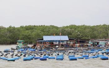 Đề xuất thành lập Khu bảo tồn biển Cần Giờ