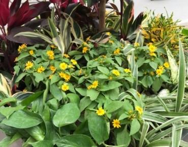 Những bồn hoa rực rỡ