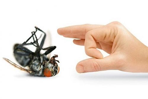 Cách đuổi ruồi bằng phương pháp tự nhiên an toàn và hiệu quả