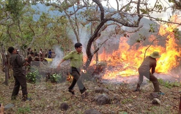 Vĩnh Phúc: Cháy lớn thiêu rụi 15ha rừng tại huyện Tam Đảo