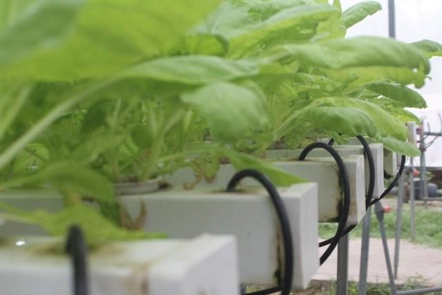 Tập trung phát triển các mô hình sản xuất nông nghiệp ứng dụng công nghệ cao