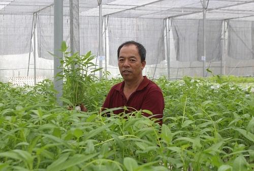 Trồng rau thủy canh theo công nghệ Israel: Mở hướng phát triển mới cho nông nghiệp