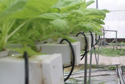 Tập trung phát triển nông nghiệp ứng dụng công nghệ cao