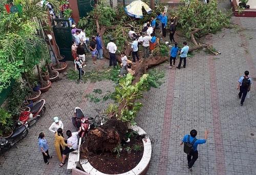 Chặt trụi cây không phải giải pháp, làm gì để an toàn khi trường có cây to?