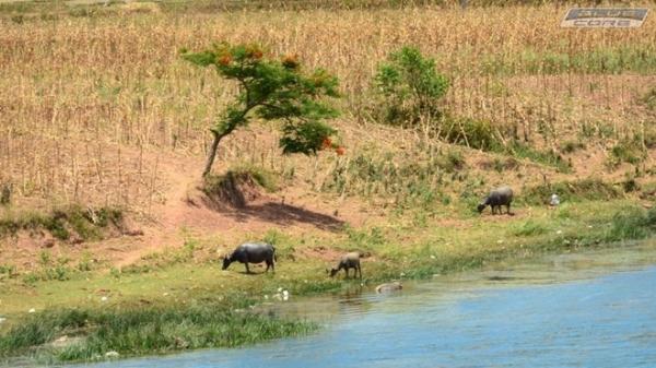 Vùng quê yên bình ở vùng Bắc Trung Bộ, nơi chúng ta trở về với tuổi thơ tắm sông, thả diều, chăn trâu.