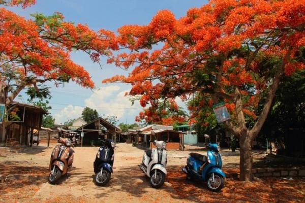 Một Tây Nguyên đầy màu sắc và rực đỏ mùa hoa phượng nở.