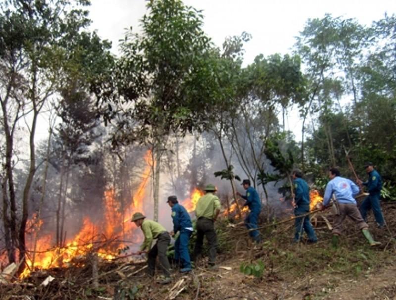 UBND tỉnh phát công điện khẩn phòng cháy, chữa cháy rừng