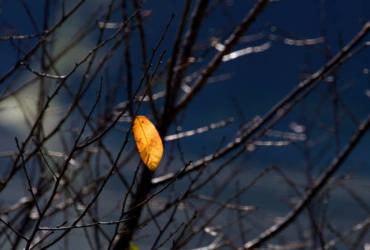 Có một chiếc lá vàng vừa rơi