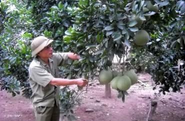 Đẩy mạnh phát triển kinh tế nông nghiệp