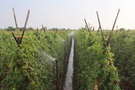 Huyện Mê Linh: Điểm sáng trong phát triển rau sạch