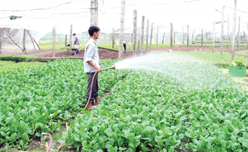 Nông nghiệp xanh, giá trị lớn