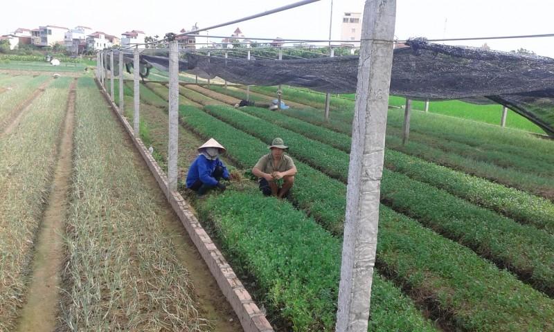 Phát triển nông nghiệp công nghệ cao: Bắt đầu từ tư duy của người dân