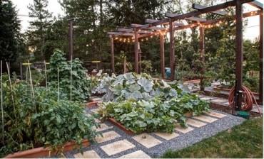 Bí quyết tự trồng rau sạch tại nhà