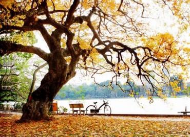 Tháng 8, lặng nghe giai điệu mùa thu Hà Nội