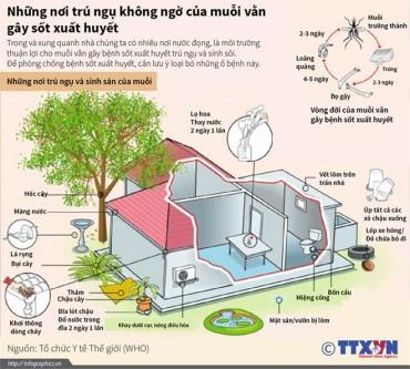 [Infographics] Loại bỏ nơi trú ngụ của muỗi vằn gây sốt xuất huyết