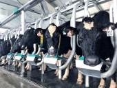 Vinamilk tiên phong giới thiệu sữa tươi 100% A2 đầu tiên tại Việt Nam