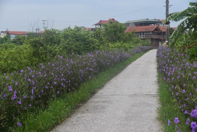 Huyện Gia Lâm: Dồn sức cán đích nông thôn mới