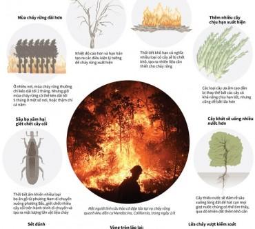 [Infographics] Biến đổi khí hậu khiến cháy rừng tồi tệ như thế nào?