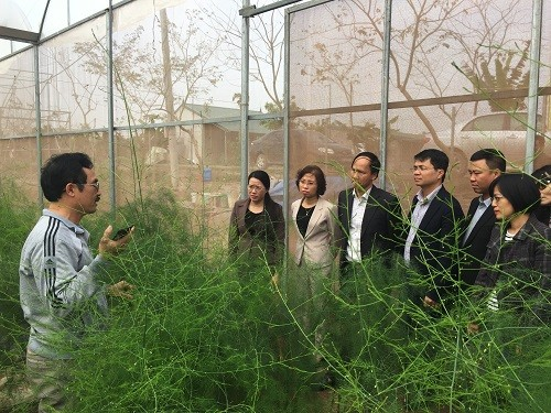 Khuyến khích phát triển chuỗi giá trị trong nông nghiệp