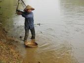 Nhọc nhằn mưu sinh nghề cào ốc, hến ven sông
