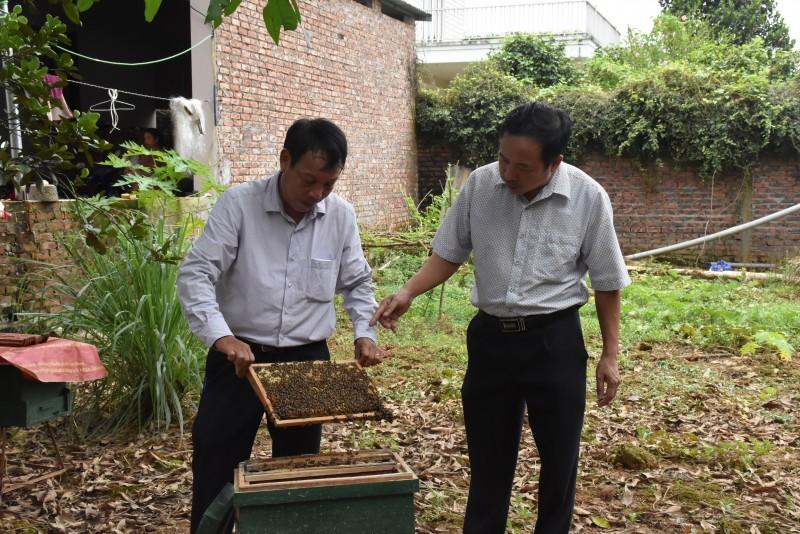 Nhân rộng mô hình nuôi ong lấy mật