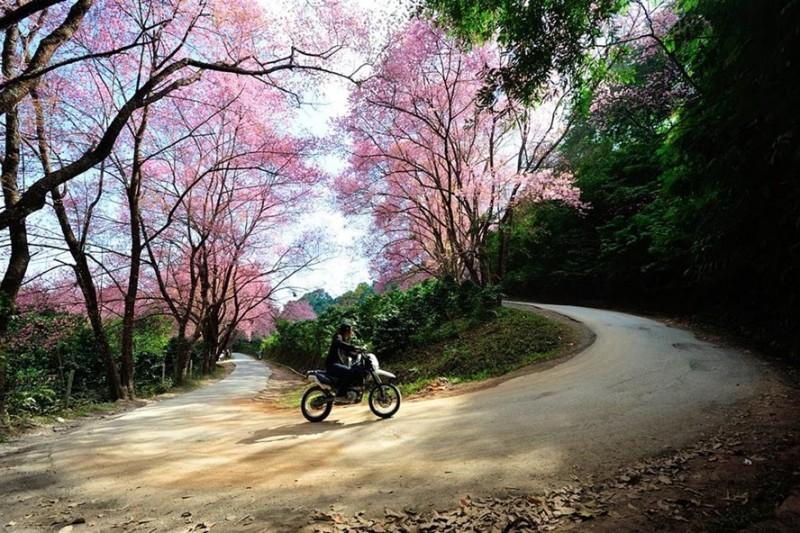 Những cung đường đẹp tại Thái Lan: Lái xe 100km quanh co ở Mae Sa – Samoeng