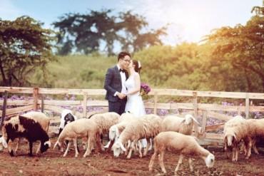 4 cánh đồng chăn cừu đẹp đến mê hồn ở Việt Nam