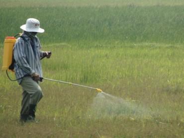 Không đùa với thuốc trừ cỏ cực độc