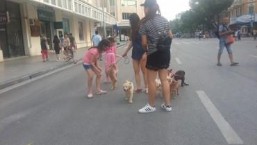 Bất an vì chó không rọ mõm