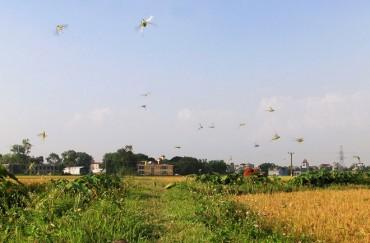 Mùa bắt châu chấu ở ngoại thành Hà Nội